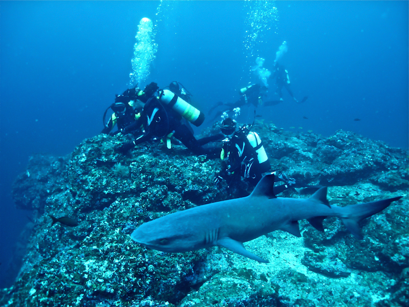 michel-swimming-with-sharks